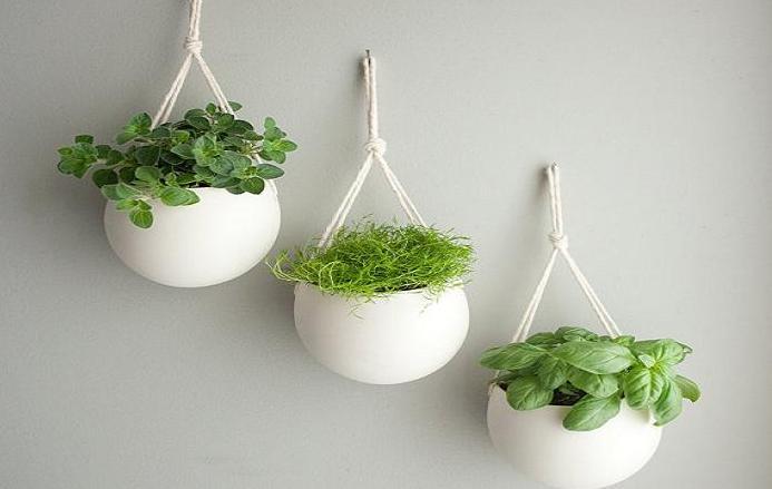 Thornhill Florist Indoor Garden Ideas For Home Amp Office