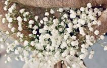 Thornhill Market Florist, wedding decor rentals, flower arrangements, hand tied bouquets, wedding and corporate florals, plants, floral design seminars, flowers in Thornhill and Toronto