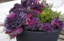 Thornhill Market Florist, urns and window sill decor, flower arrangements, hand tied bouquets, wedding and corporate florals, plants, floral design seminars, flowers in Thornhill and Toronto